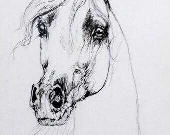 Arabian horse, equine art, horse portrait, cheval, equestrian, original pen drawing