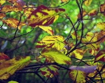 Appalachian fall leaves