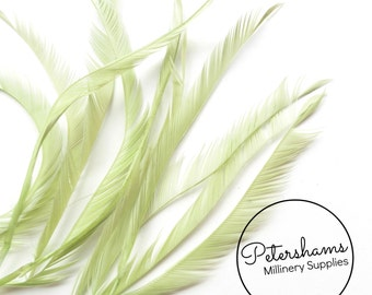 10 Zippered Goose Biot Feathers for Millinery and Hat Trimming - Sage Green