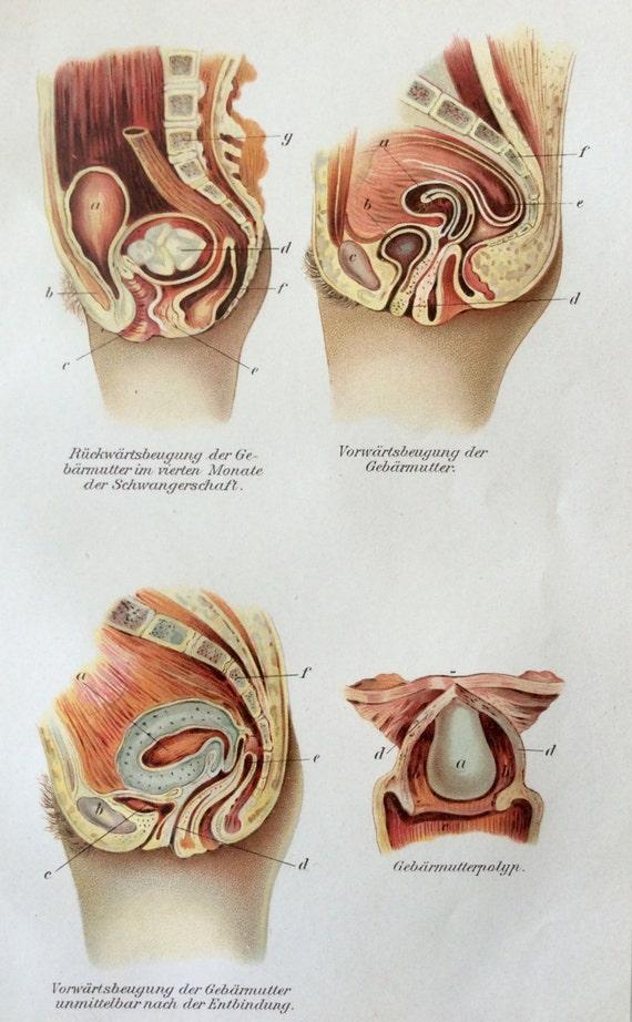 Groß Anatomy Of Pregnant Uterus Bilder - Menschliche Anatomie Bilder ...