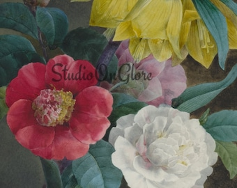 Vintage 1838 Peonies watercolor, Single 8.5x11 art image & png for Junk Journals, Scrapbooks, Decoupage, Card Making, Easter Decor #17095