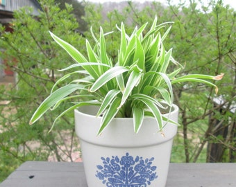Pfaltzgraff Flower Pot - Blue and White Stoneware Planter - F.T.D.A.1982 - Made in USA