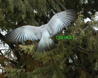 """Photography: """"Spread your Wings"""""""