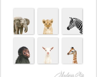 Baby Nursery Art Animal Prints Animal Nursery Prints Jungle Nursery Decor Safari Nursery Art Zoo Animal Nursery Baby Animal Nursery