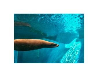 Gliding Seal GREETING CARD