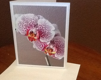 Janelle's Blooming Orchid #2    Cards   (set of 4 with envelopes)