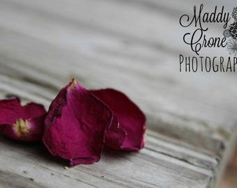 Rose Petals Photograph, Picture with Mat, 4x6