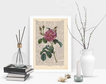Print - CHINA ROSE - antique book page