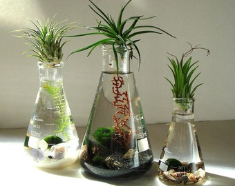 Science Set Marimo Moss Balls Air Plants in Beaker Flasks Zen Pet Mini Aquarium / Terrarium