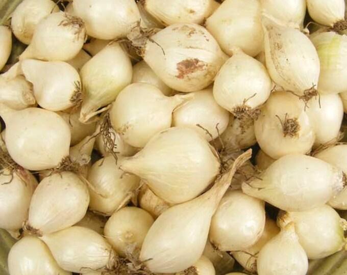 White Onion Sets Organic | Onion Bulbs White Ebenezer Onion 4 Pounds Spring Shipping