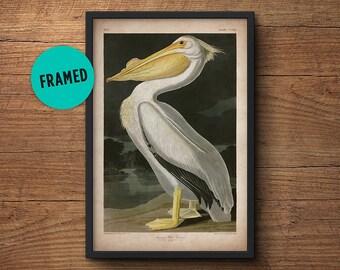 Pelican bird print, Framed art, Pelican print, Audubon print, Audubon print, Birds of America, John James Audubon, Framed print, Wall art