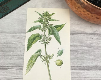 Stinging nettle print greenery home decor nettle leaf apothecary vegan gift nature lover plant lover gift mid century home 1970s print