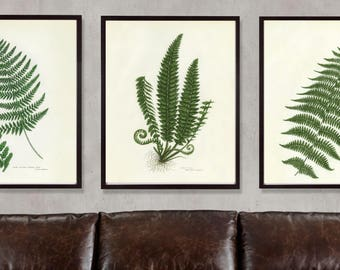 Fern Print Set, Botanical Print Set, Set of Fern Prints, Fern Prints, Set of antique fern prints, antique fern print set, Set of 3 prints
