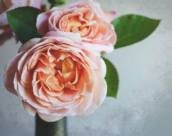"""Rose photograph botanical print pale peach pastel nature photograph floral wall art  """"Peach Rose on Gray"""""""