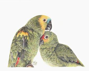 Commissioned Pet Portrait - Colored Pencil 9x12''