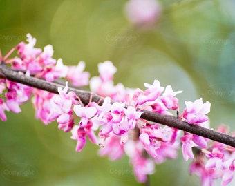 Natural pink little flowers branch, digital photo.