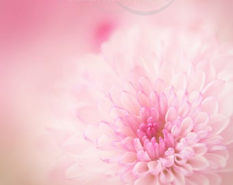 Digital Download Pink Flower Wall Art Instant Art Printable Fine Art Photography Flowers Floral Soft Focus Square Extra Large 76 x 76 inches