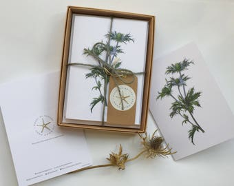 Greetings cards 5 pack. Seaholly. A6 blank cards and envelopes. Gift box. Watercolour painting. Botanical art.
