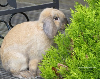 Rabbit Photography / Bunny Photography / Outdoor Photography / Animal Photography