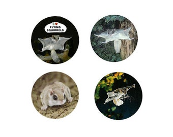 Flying Squirrel Magnets:  4 Fabulous Flyers for your home, your collection,  or to give as a unique gift