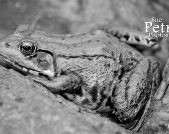 Black and White Photography, Frog Photography, Animal Photography, Boys room decor, Amphibian Photos, Green Frog in monochrome