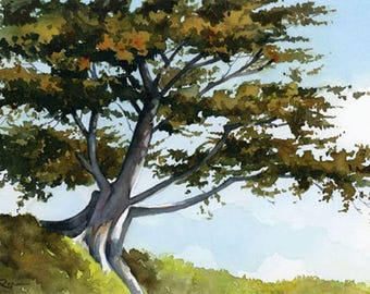 Cypress Tree - Art Print - Watercolor Painting - Signed by Artist DJ Rogers - Landscape - Wall Decor