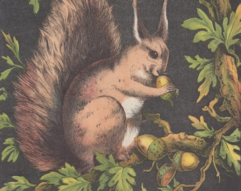 Squirrel Eating Acorns in Tree Wildlife Nature Animals Squirrels Antique Lithograph Art Print 1877