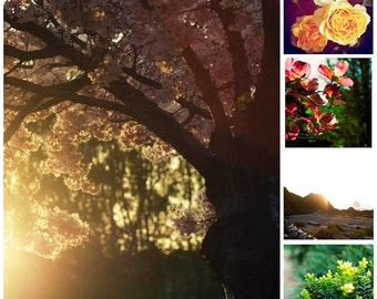 Flower Print Nature Photo Gallery Wall Art Set Yellow Sunshine Flowers Decor for Living Room, Bedroom, Home Office, Dining Room, Doctor