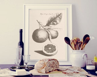 Orange print, Fruit print, Instant download botanical print, Kitchen print, Vintage botanical print, Print for kitchen, Art print, JPG PNG