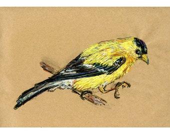 5 x 7 drucken Stieglitz - Vogel Kunst Mischtechnik zeichnen