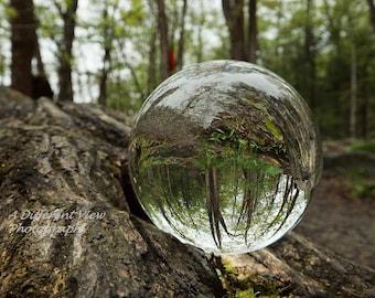 Glass Ball Photography, Reflection Photography, Woodland Photography, Nature Photography, Crystal Ball Photography. 8x10 Framed Photo.