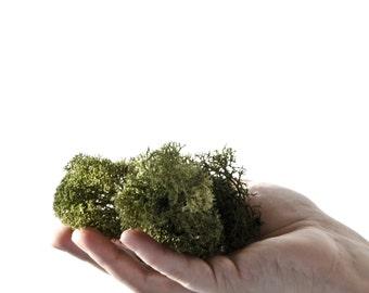 Air Plants, Reindeer Moss, dark green, moss tree,  concrete air plant holder add on