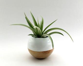 Sphere Succulent Air Plant Planter // White + Wood