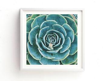 succulent print, desert wall art, echeveria succulent photograph, botanical wall art, for her, photography gift modern home decor, printable