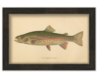 Rainbow Trout by S. F. Denton