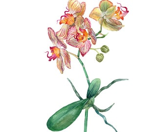 Orchid Flowers Original Watercolour Painting 97