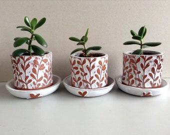 Succulent Terracotta Plant Pot