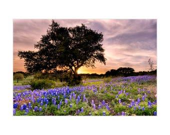 Texas Photography, Bluebonnet Print, Bluebonnet Art, Texas Hill Country, Texas Landscape, Floral Photography, Bluebonnets, Matted Print