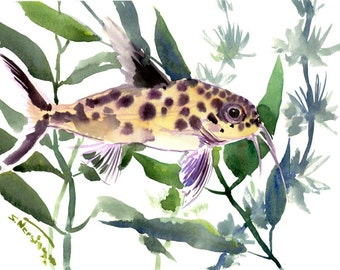 cuckoo catfish aquarium fish artwork Synodontis Multipunctatus, aquarium art, original watercolor painting, fish lover olive green