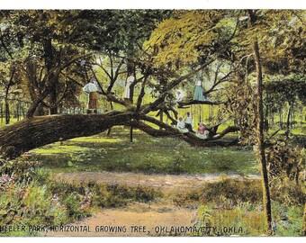 Oklahoma Horizontal Tree Photo Postcard, 1909