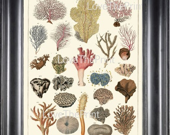CORAL PRINT Marine  Art Print 55 Beautiful Antique Colored Colrals Home Decor to Frame Sea Ocean Natural Science