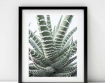 Downloadable print Printable art Instant download Zebra Succulent Photography Photo Botanical Nature Plants Small Gallery Wall Art Decor