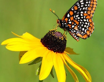 Butterfly Garden Flower Mix Flower Seeds - Non-GMO, Open Pollinated, Untreated, Heirloom, Native, Flower Seeds
