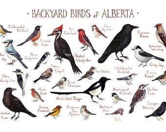 Alberta Backyard Birds Field Guide Art Print / Watercolor Painting / Wall Art / Nature Print / Bird Poster