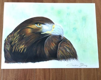 Eagle, to Prismacolor colored pencils. Illustration.