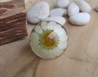 Dry daisy ring, Real daisy resin ring, Flower resin ring, Real flower resin band, Adjustable ring, Nature ring, Botanic ring, Flower ring
