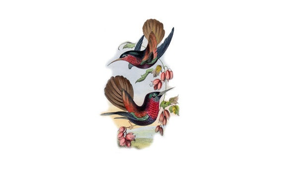 Temporary Tattoo Gorgeous Vintage Hummingbird Illustration X
