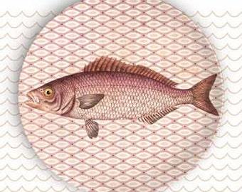 Sea Life Fish III plate
