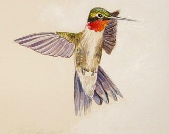 Original Ruby Throated Hummingbird bird paintings hummingbird original paintings watercolor hummingbird