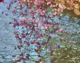 Cherry Blossoms At The Water